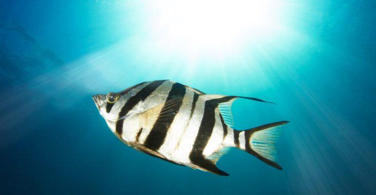 L Eclairage Dans Un Aquarium D Eau Douce Pour Les Debutants